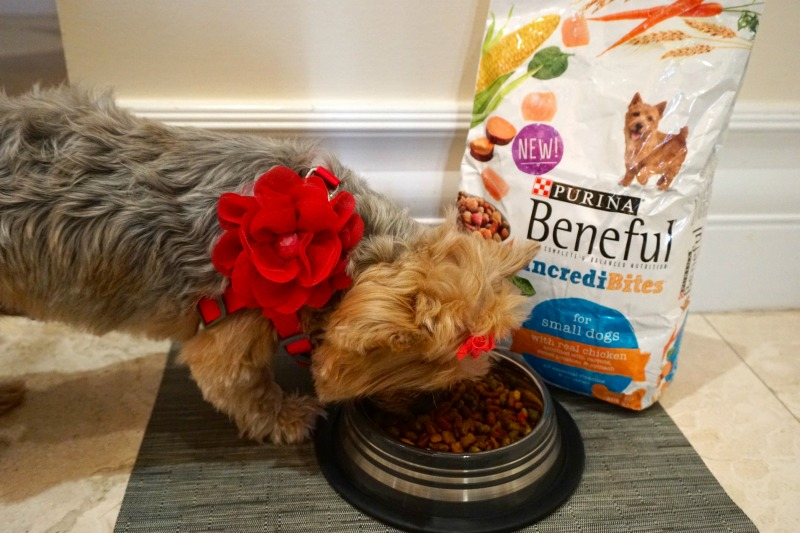 MommyMafia.com Purina Beneful #shop #AmorBeneful #ad