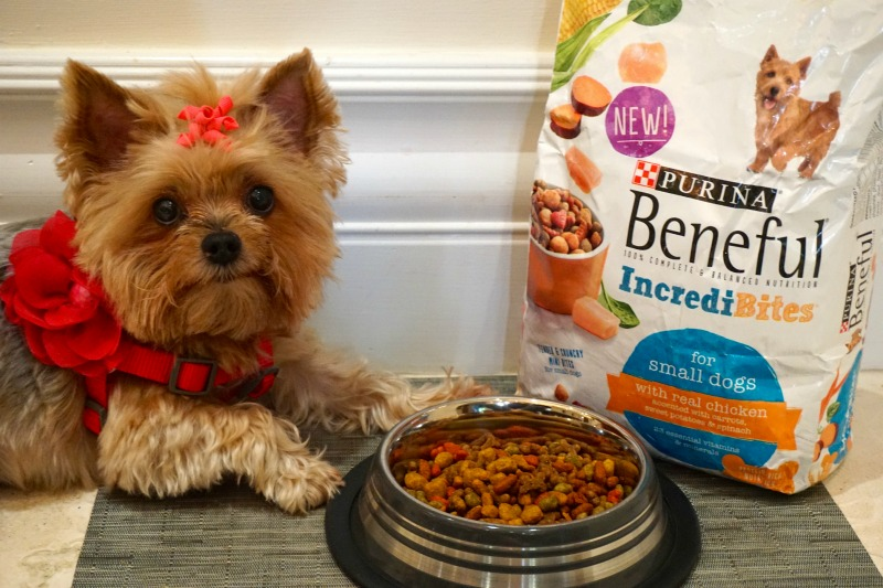 Purina_Beneful_IncrediBites_MommyMafia.com #shop #AmorBeneful #ad
