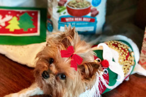 diy-ugly-christmas-sweater-for-dogs